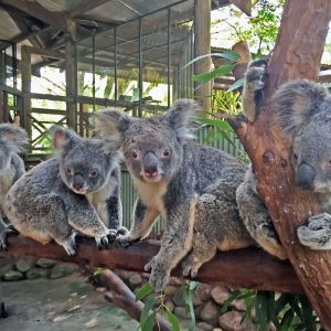 Sight Seeing tours Cairns