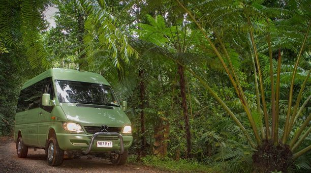 Venture into the oldest living rainforest in the world